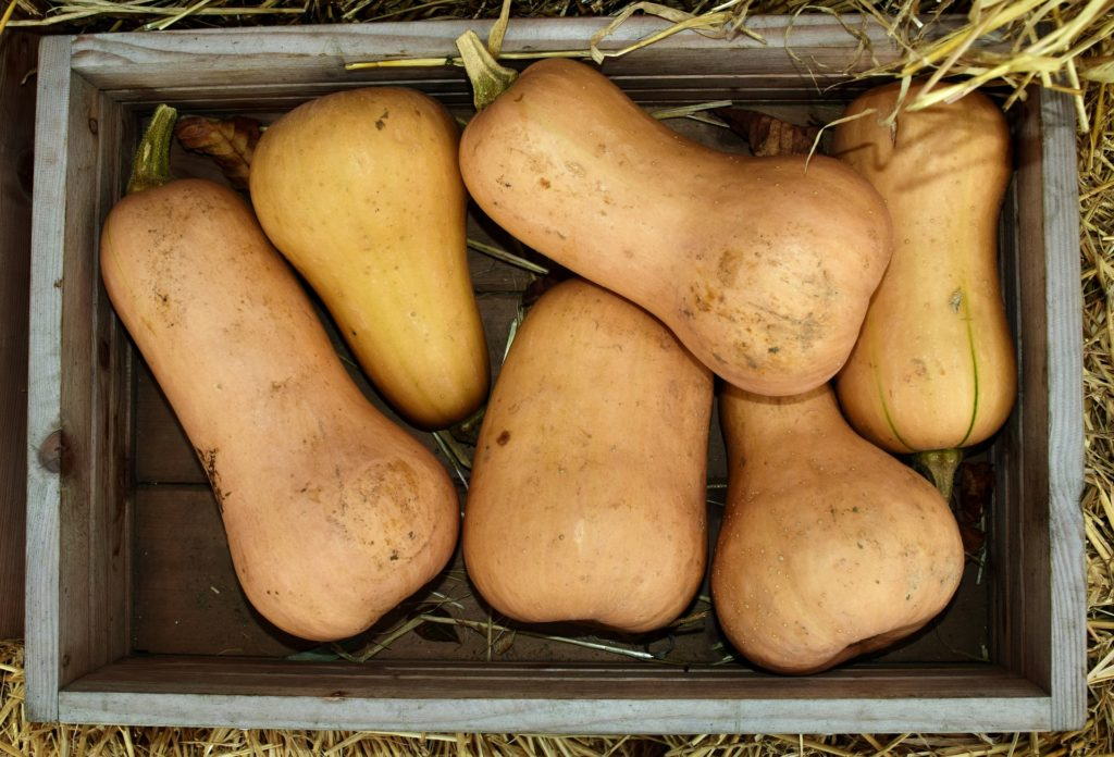 butternut squash in box